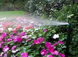 SPRINKLER WHEN TO WATER