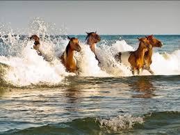 horses-of-assateague