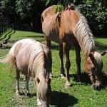Podcast #160 Horse Rescue Farm