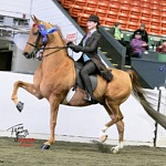 Podcast #187 Equestrian's Young Champion